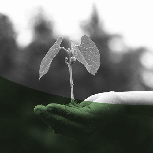 Mit Gamification für mehr Nachhaltigkeit